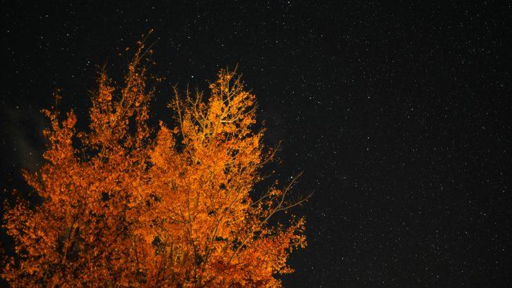 冷たい夏と夜の公園