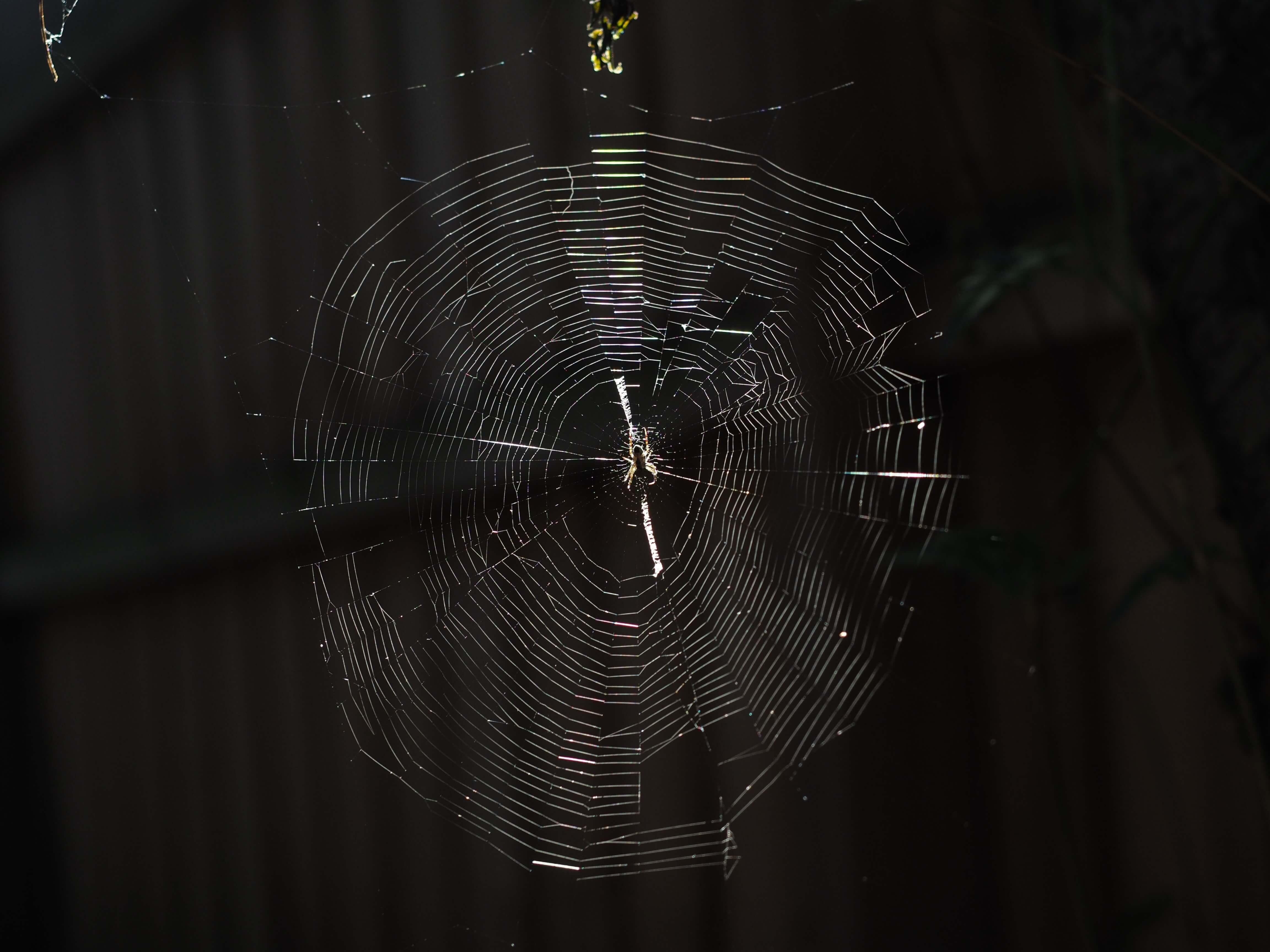 夢 蜘蛛 の